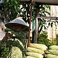 Vietnam_avril_2007_420